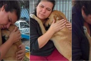 Αδέσποτος σκύλος αφήνει το φαγητό και αγκαλιάζει τη γυναίκα - Ο λόγος ραγίζει καρδιές