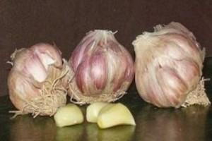 6 Λόγοι που πρέπει να σταματήσετε να καταναλώνετε σκόρδο αμέσως. Είναι πολύ επικίνδυνο!