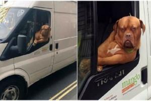 Σκύλος πηγαίνει στη δουλειά μαζί με το αφεντικό του και έχει μάθει να παίρνει την σωστή πόζα