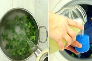 Βράζει τα φύλλα αυτού του φυτού και ρίχνει τον ζωμό στο πλυντήριο - Ο λόγος; Πανέξυπνος!
