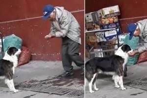 Διψασμένος σκύλος κάνει βόλτες στους δρόμους - Τότε ένας ηλικιωμένος τον βλέπει και...