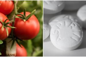 Έριξε δυο ασπιρίνες στη γλάστρα με τις ντομάτες - Ο λόγος θα σας ενθουσιάσει