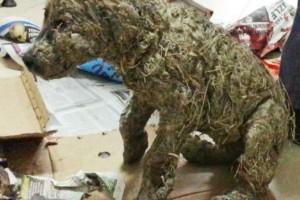 Ένα κτήνος κάλυψε το σκύλο με κόλλα - Όταν το είδε ο διασώστης το πήρε και...