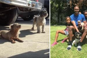 """Σκύλος με όγκο εγκαταλείπεται μαζί με το φίλο του - Αυτό που κατέγραψε η κάμερα στη συνέχεια θα σας """"παγώσει"""""""