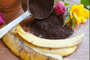 Πετάτε τις φλούδες μπανάνας  ή το κατακάθι του καφέ; Δείτε πως να τα χρησιμοποιήσετε