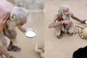 Ηλικιωμένος άνδρας πλησιάζει ένα σκύλο και... - Το βίντεο ραγίζει καρδιές