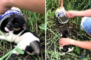 Κουτάβι παγιδεύτηκε σε ποντικοπαγίδα - Ωστόσο στη συνέχεια...