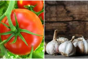 Φύτεψε δίπλα από τις ντομάτες του σκόρδο - Μόλις δείτε το λόγο θα μείνετε άφωνοι