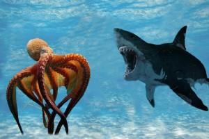 Η επική μάχη ενός καρχαρία με ένα γιγάντιο χταπόδι - Η κατάληξη θα σας αφήσει άφωνους