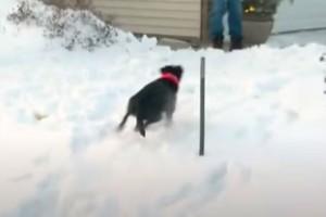 87χρονη γιαγιά γλίστρησε κι έπεσε στα χιόνια - Τότε ο σκύλος του γείτονα έκανε το απίστευτο