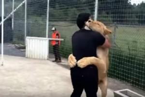 Λιονταρίνα τρέχει στην αγκαλιά ενός άντρα - Η συνέχεια... ανατριχιάζει