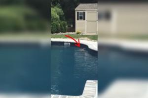 Είδε ένα παράξενο πλάσμα να κολυμπάει στην πισίνα της. Όταν κατάλαβε ότι δεν ήταν σκύλος, άρπαξε αμέσως την κάμερα…