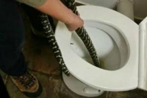 Φίδι αναδύθηκε από την τουαλέτα και δάγκωσε γυναίκα (photo)