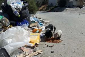Σοκ: 100 γατάκια και σκυλάκια ζουν μόνα στην καμένη Μόρια και ψάχνουν για σπίτι
