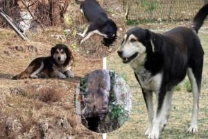 Κτηνωδία: Σκότωσε 2 αδέσποτες φιλικές σκυλίτσες που ζούσαν μαζί χρόνια