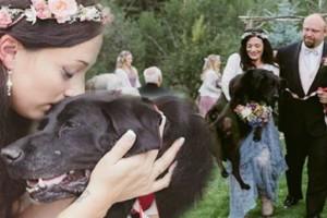 Ετοιμοθάνος σκύλος κράτησε τις δυνάμεις του για να παρευρεθεί στο γάμο της ιδιοκτήτριας του - Η συνέχεια σοκάρει...