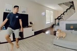 Στην καραντίνα ξεκίνησε να δίνει την μπάλα στο σκυλάκι του - 7 μήνες μετά κάνει το απίστευτο