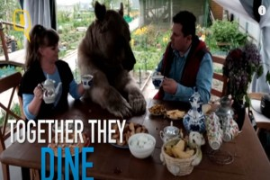 Πριν από 23 χρόνια βρήκαν ένα ορφανό αρκουδάκι. Σήμερα ζει... (video)