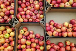 Η θαυματουργή δίαιτα του μήλου που υπόσχεται να σε... μεταμορφώσει σε μόλις μία εβδομάδα