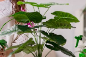 Βάλτε αυτό το φυτό στο σπίτι σας και προσελκύστε τύχη και χρήματα!