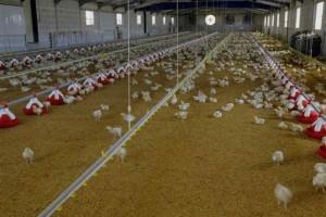 Κορωνοϊός: Κρούσματα στην «Πίνδο» και κλείσιμο πτηνοσφαγείου