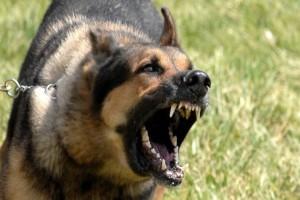 Σοκ: Αγέλη σκύλων κατασπάραξε μητέρα 4 παιδιών