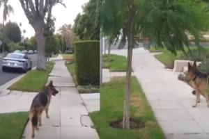 Σκύλος φρικάρει μόλις καταλαβαίνει ότι το αφεντικό του δεν βρίσκεται πια από πίσω του
