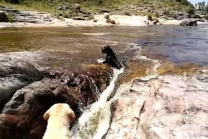 Τα δύο σκυλιά έπαιζαν όταν ξαφνικά το ένα έπεσε στο ποτάμι -  Η συνέχεια θα σας αφήσει άφωνους