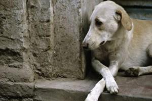 Σπαρακτικό βίντεο: Έτσι νιώθουν τα σκυλιά όταν εγκαταλείπονται