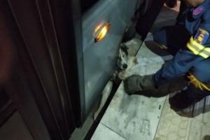 Γνωστό αδεσποτάκι της Νέας Σμύρνης εγκλωβίστηκε στο τραμ - Κατάφεραν και το έσωσαν