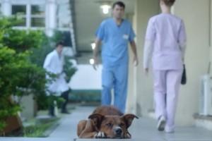 Σπαρακτικό βίντεο δείχνει ότι η αφοσίωση ενός σκυλιού δεν τελειώνει ποτέ...