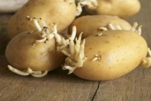 Αυτές οι 5 τροφές είναι θανατηφόρες - Οι περισσότεροι από εμάς τις έχουμε στις κουζίνες μας