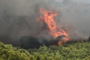 Φωτιά στη Βόρεια Κυνουρία Αρκαδίας - Επιχειρούν 81 πυροσβέστες