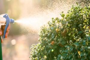6+1 τρόποι για να χρησιμοποιήσετε το ξύδι στον κήπο ή την αυλή σας