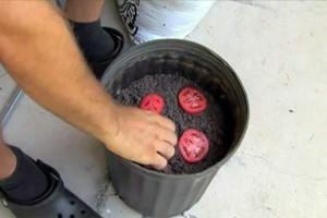 Σταματήστε να αγοράζετε ντομάτες! Με αυτή την τεχνική θα μπορείτε να καλλιεργείτε εύκολα τις δικές σας, στον κήπο σας