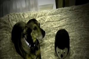 Σκύλος πήδηξε ξαφνικά στο κρεβάτι της μητέρας και την οδήγησε στο μωρό της - Η συνέχεια σοκάρει (Video)
