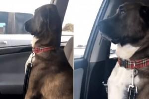 """Σκύλος δεν """"έριξε"""" ούτε ένα βλέμμα στον ιδιοκτήτη του - Ο λόγος θα σας εκπλήξει (βίντεο)"""