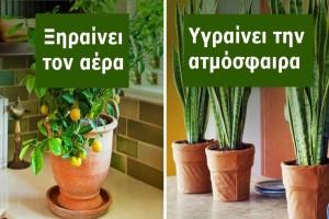 10 φυτά εσωτερικού χώρου που καθαρίζουν την ατμόσφαιρα και ρυθμίζουν την υγρασία του σπιτιού σας