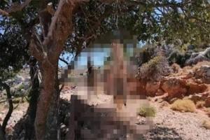 Κρήτη: Στα χέρια της ΕΛ.ΑΣ. ο άνδρας που έγδαρε και κρέμασε σκύλους σε δέντρο