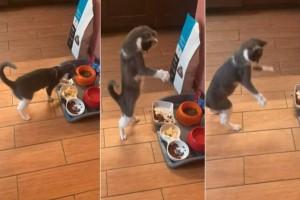Η περίεργη αντίδραση της γάτας όταν δοκιμάζει για πρώτη φορά ομελέτα θα σας φτιάξει την μέρα (Video)