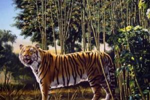 Το 95% των ανθρώπων δεν μπορεί να εντοπίσει την δεύτερη τίγρη στη φωτογραφία - Εσύ μπορείς;