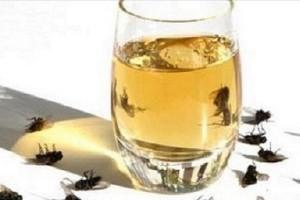 Μύγες: Η σπιτική συνταγή που θα τις εξαφανίσει από το σπίτι σας