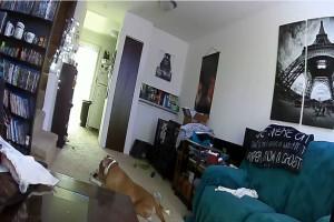 Σκύλος έπαιζε με μία μπαταρία και έβαλε φωτιά στο σπίτι του - Το βίντεο θα σας αφήσει άφωνους