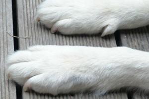 Συναγερμός στη Σκιάθο: Συνελήφθη ο άνδρας που έπνιξε σκύλο - Πως τον εντόπισε η Αστυνομία