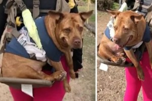 """Ηλικιωμένος σκύλος """"βρίσκει"""" και πάλι το χαμόγελο του με μία ιδιαίτερη βόλτα (video)"""