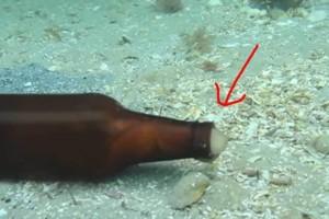 Δύτης βλέπει ένα γυάλινο μπουκάλι να κουνιέται μόνο του στο βυθό - Τότε ένα μυστηριώδες πλάσμα βγαίνει από μέσα... (Video)