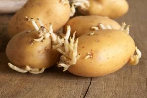 Το κόλπο για να μη βγάζουν φύτρες οι πατάτες σας!