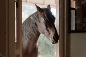 Ανέκδοτο (01/05): Η σύζυγος και... το άλογο
