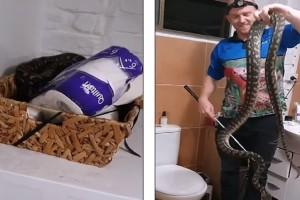 Τρόμος σε σπίτι: Οικογένεια ανακάλυψε ένα τεράστιο φίδι κουλουριασμένο μέσα στο χαρτί τουαλέτας τους! (Video)