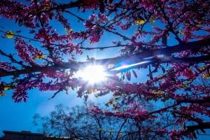 Καιρός σήμερα (17/5): «Μυρίζει» καλοκαίρι - Αίθριος σε ολόκληρη τη χώρα & αύξηση της θερμοκρασίας (Video)